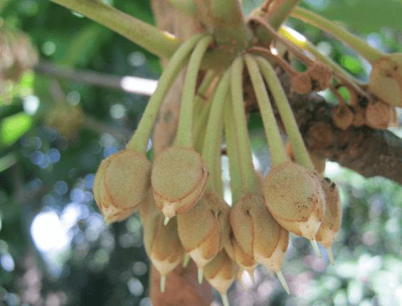 Phulwara Butter Image